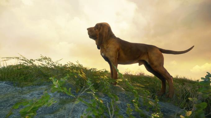 theHunter Call of the Wild Bloodhound Torrent Download