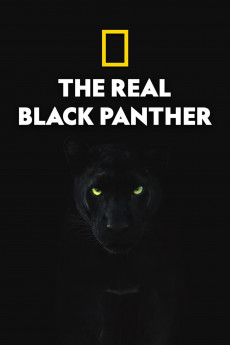 the real black panther 612656ae47fbf